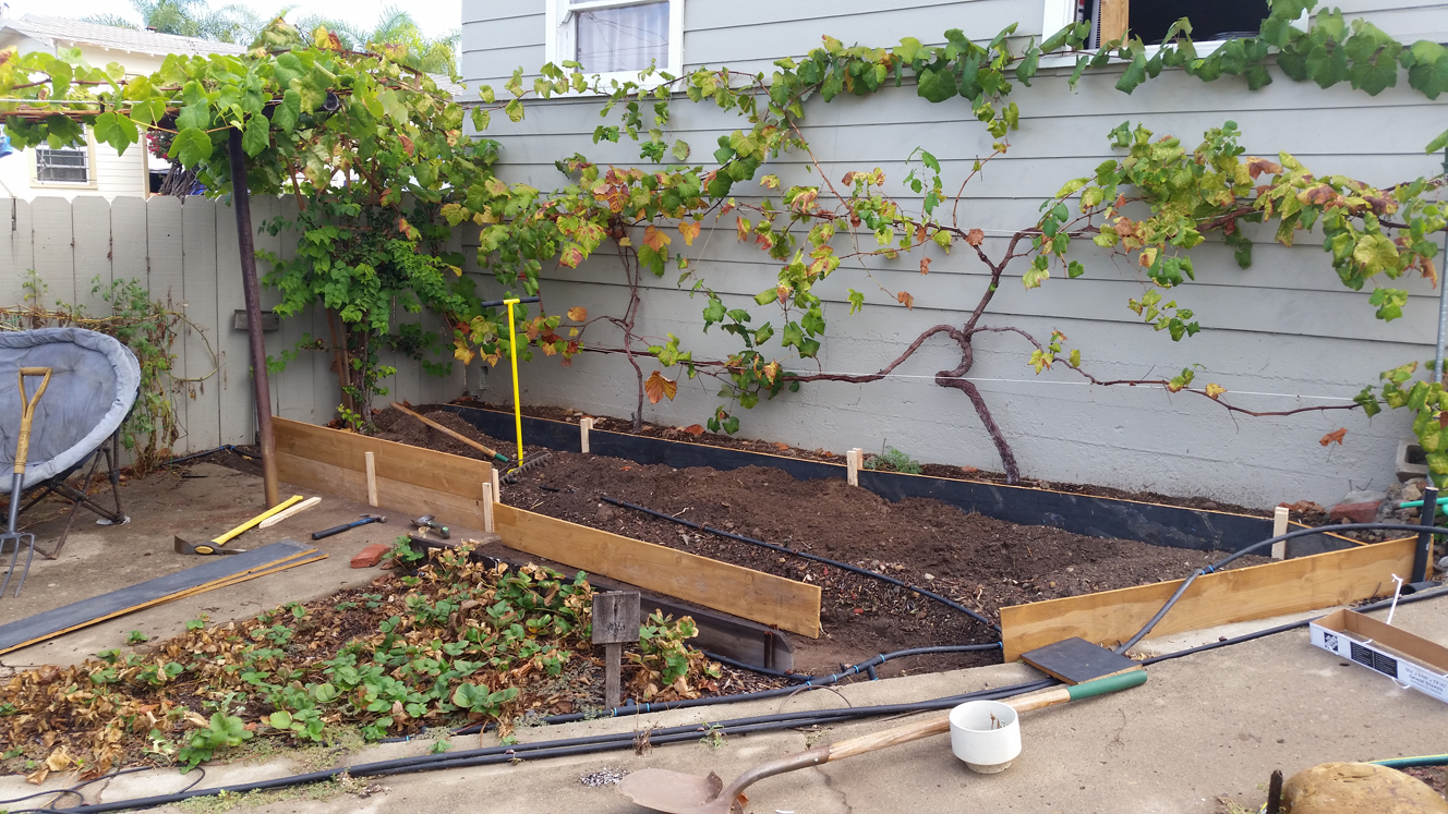 planting a winter garden soil repair time mind your dirt
