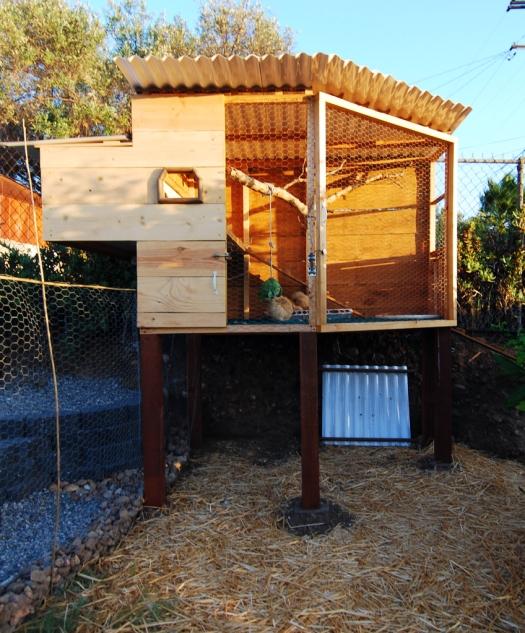 Chicken Coop 022