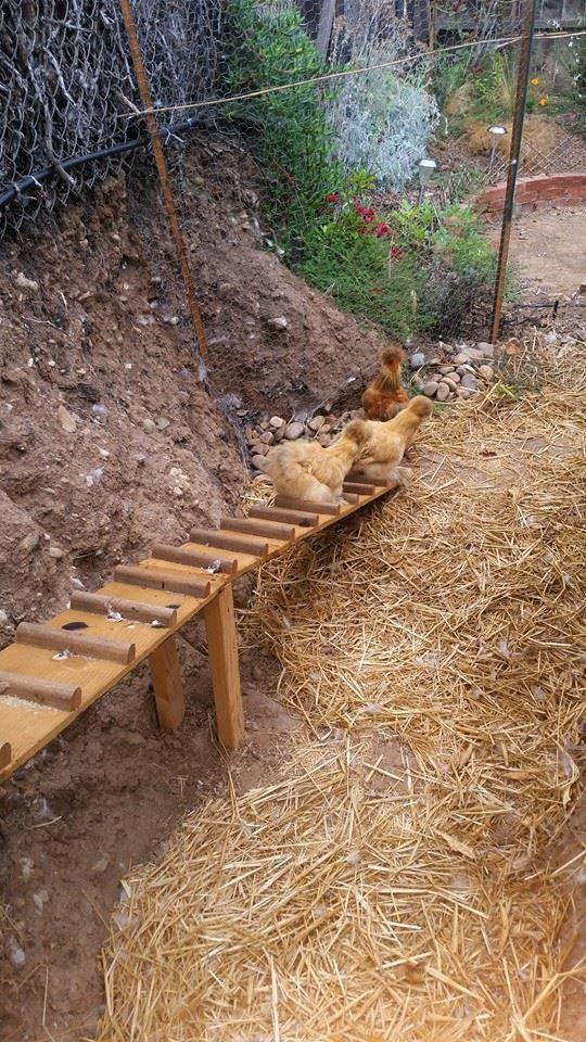 Chicken Coop 028