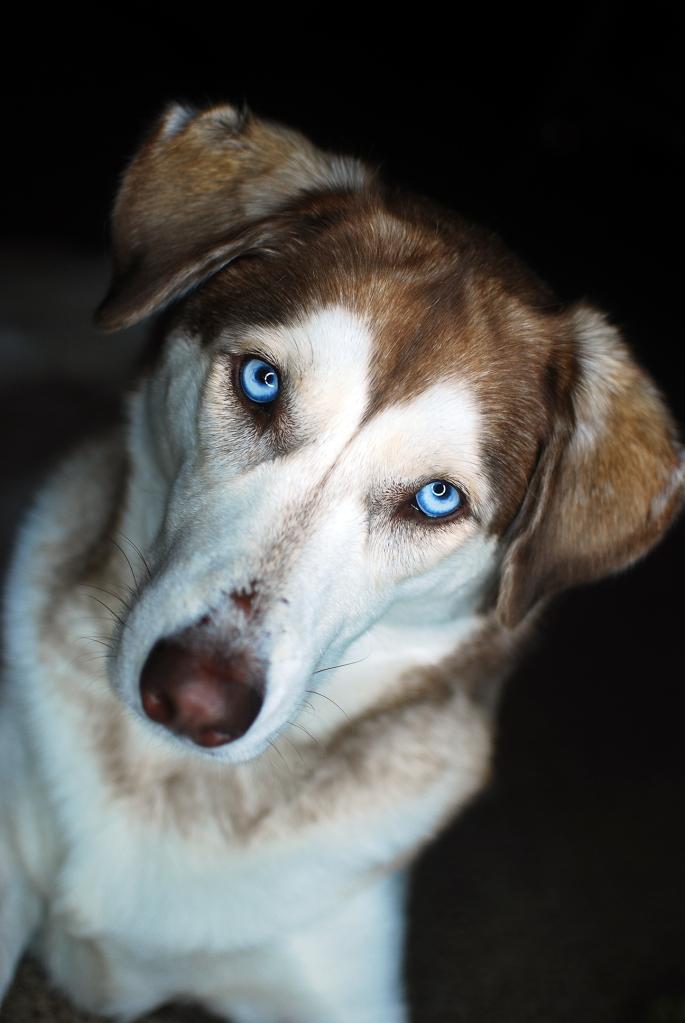 Sasha Portrait 01