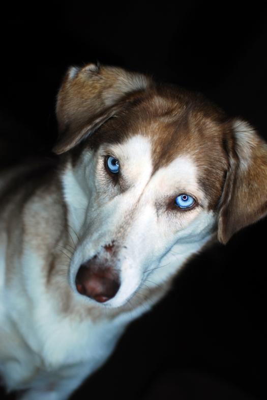 Sasha Portrait 02