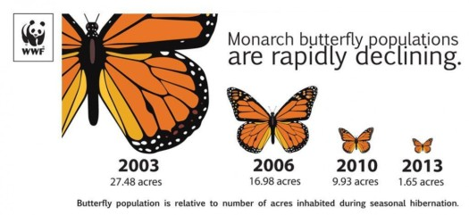 monarch decline