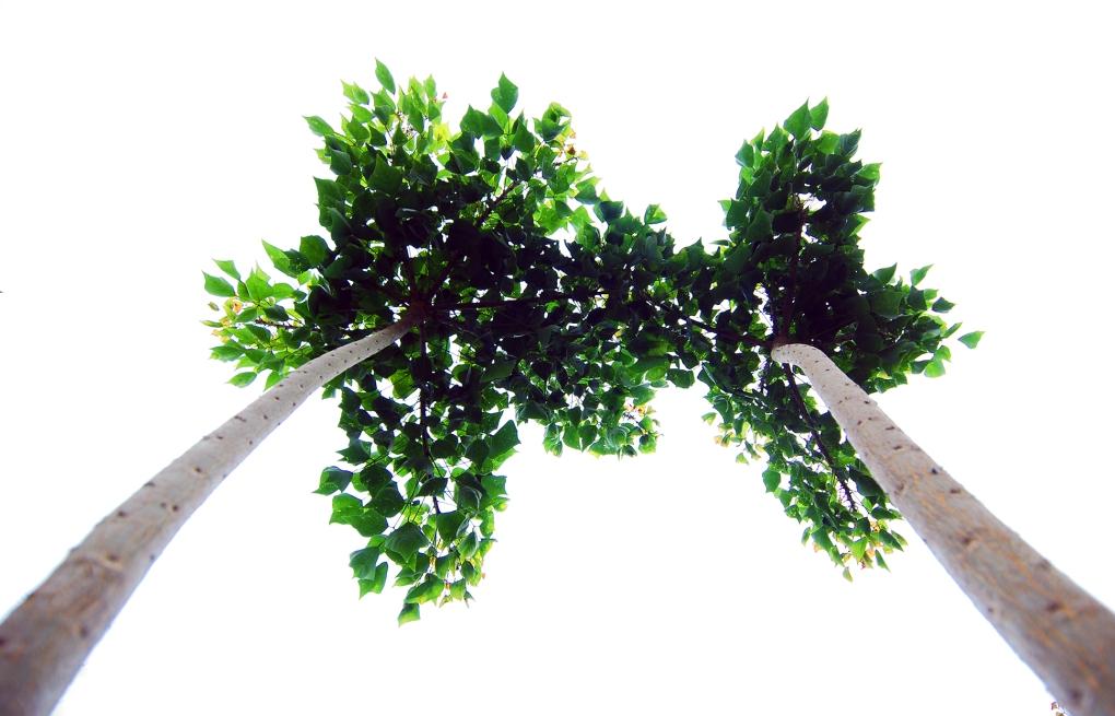 Coastal Coral Propagation 010_Fast Upward Branch Growth