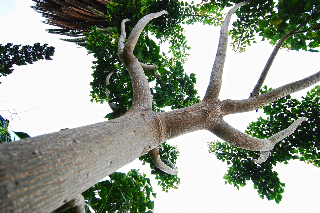 Coastal Coral Propagation 06_Branch Displaying Good Ramification