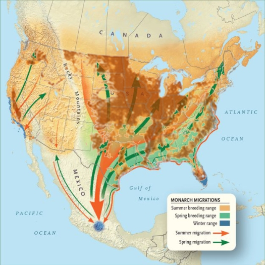 Monarch Butterfly Migration Route overly with pesticide usage in agriculture