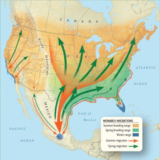 Monarch Butterfly Migration Route